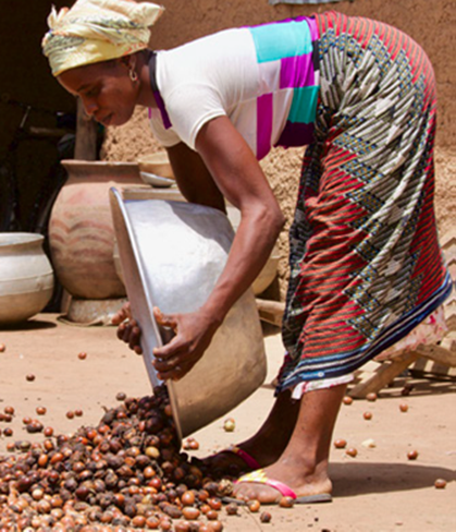 The AAK Kolo Nafaso programme – Securing an alternative shea supply chain